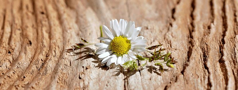 Idées De Cadeau Pour Les Noces De Bois 5 Ans De Mariage